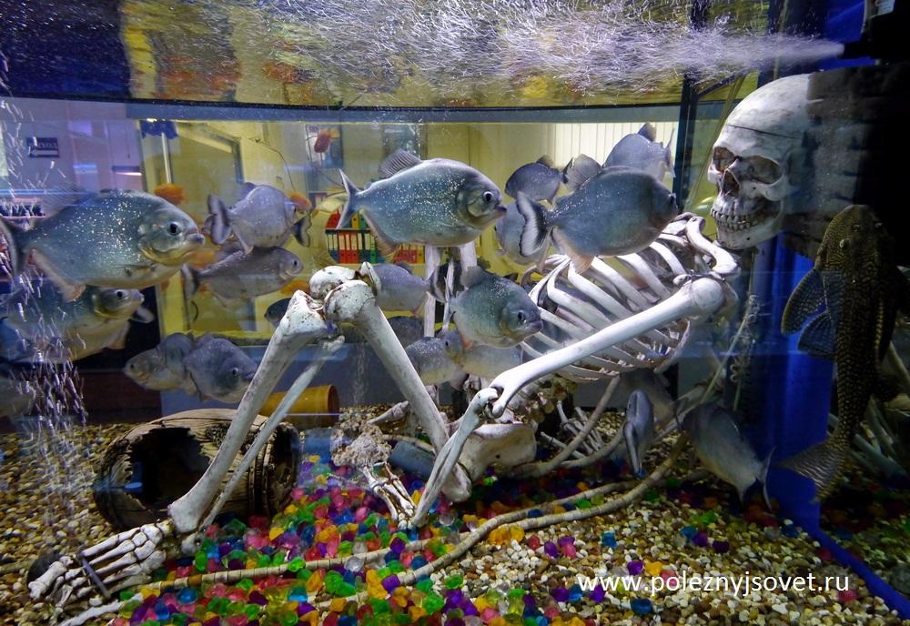 Болезни Рыб Гороскоп